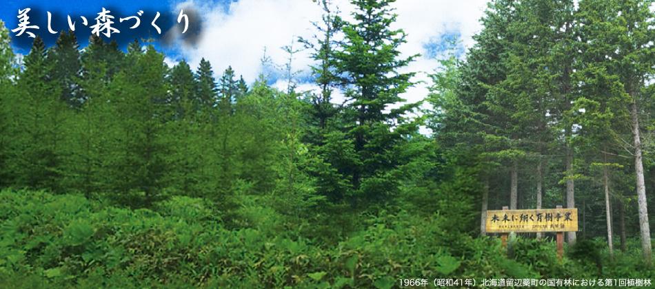 美しい森づくり:1966年(昭和41年)北海道留辺蘂町の国有林における第1回植樹林